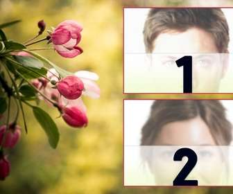 collage deux photos avec des tulipes au printemps roses fleur