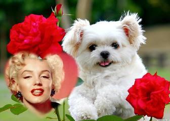 effet libre de lamour avec un chiot mignon et fleurs rouges pour ajouter votre photo