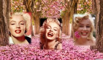 collage gratuit pour editer avec trois photos et les ajouter un paysage fleuri