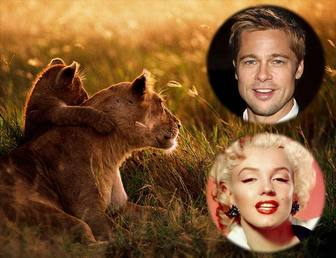 collage deux photos avec une lionne et son petit
