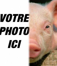 Cochon avec votre visage pour faire un photomontage. Utilisez cet ensemble de