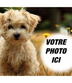 Effet photo avec un chiot mignon où vous pouvez ajouter votre photo gratuitement