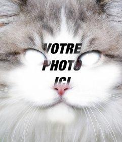 Placez votre visage dans le visage dun chat éditer cet effet libre