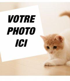 Effet photo avec un chaton mignon pour télécharger votre photo préférée