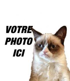 Photomontage avec Grumpry chat, meme qui est devenu célèbre partout sur Internet