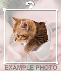 Autocollant dun chaton avec effet qui sort de votre photo
