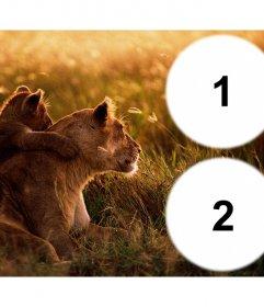 Collage de deux photos avec une lionne et son petit