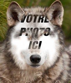 Placez votre visage sur un loup avec cette photo effet