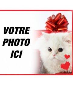 Carte postale romantique avec chaton persan blanc avec des coeurs en face dune boîte-cadeau et la photo que vous téléchargez en ligne
