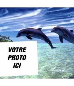 Postale de vacances pour modifier avec votre photo et lajouter avec deux dauphins