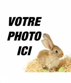 Photomontage avec un lapin et oeufs de pâques pour ajouter à vos photos en ligne et gratuit