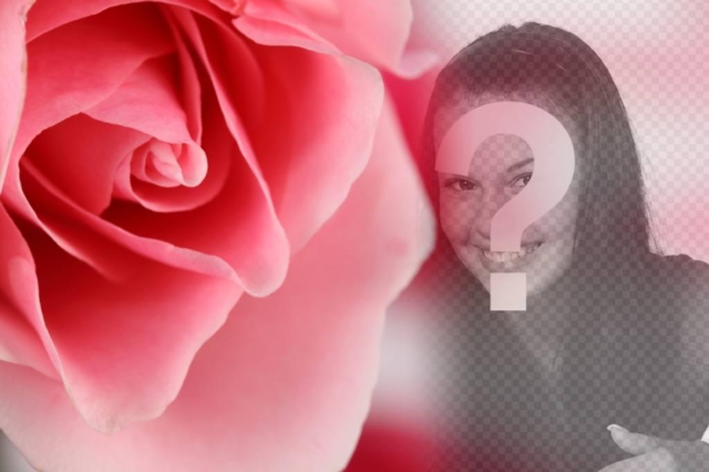 Photomontage romantique avec une rose rose et le flou darrière-plan où superposer une photo de vous-même ou votre partenaire