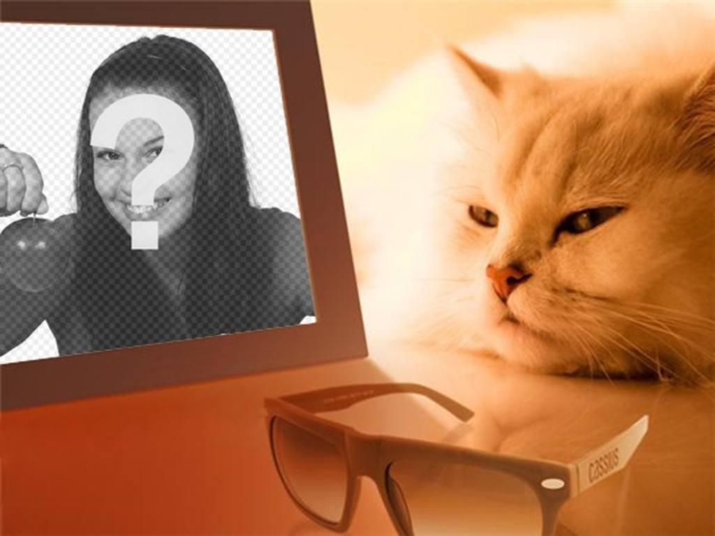 Photomontage dun chat sennuie voir votre photo dans lequel vous mettez limage que vous voulez
