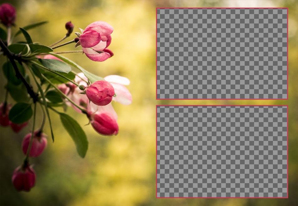 Collage de deux photos avec des tulipes au printemps de roses en fleur