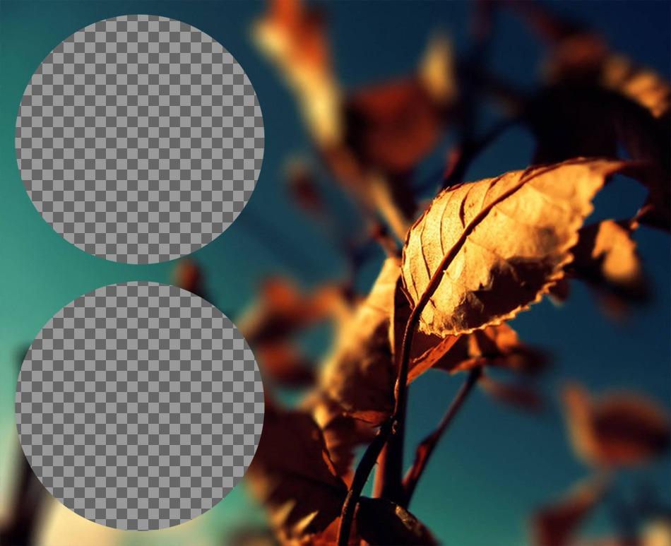 Collage avec deux cadres cercle à côté dune feuille dor en automne