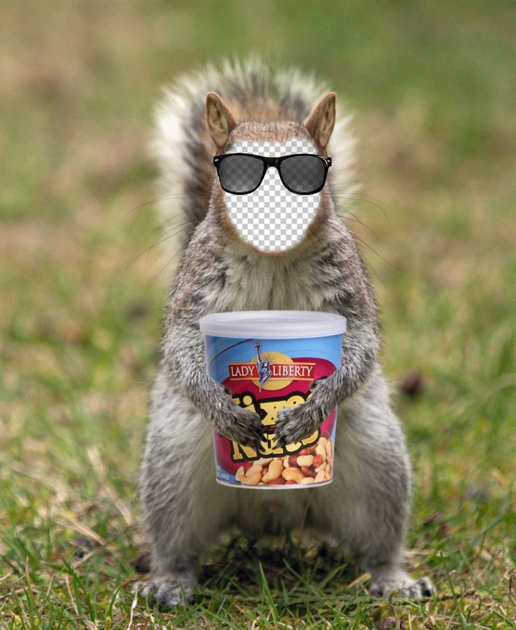 Placez votre visage dans un écureuil avec des lunettes de soleil hipster et une boîte darachides