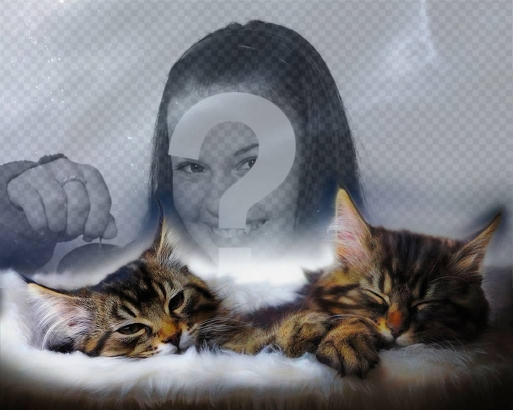 Collage avec deux chatons