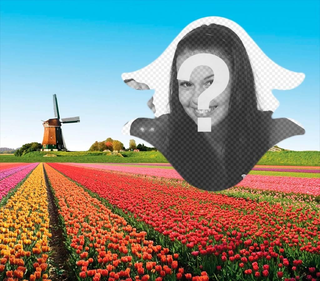 Carte postale de la Hollande avec les tulipes