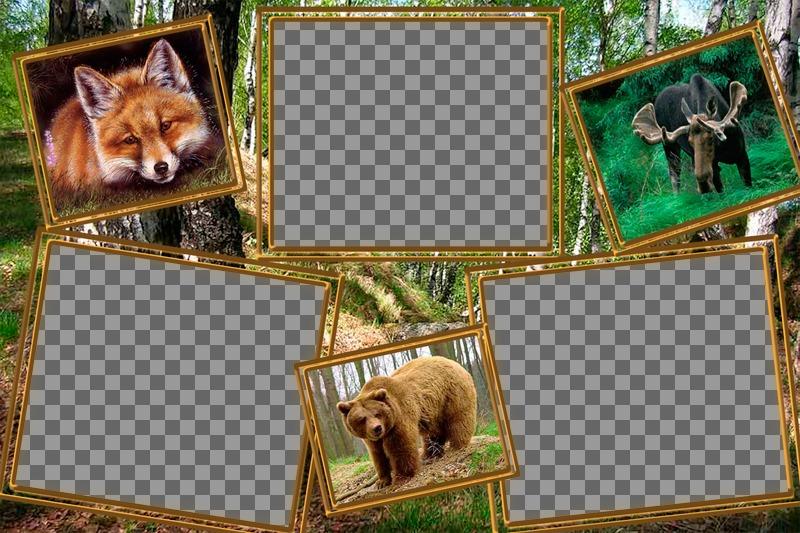 Collage danimaux à modifier avec trois photos de vous