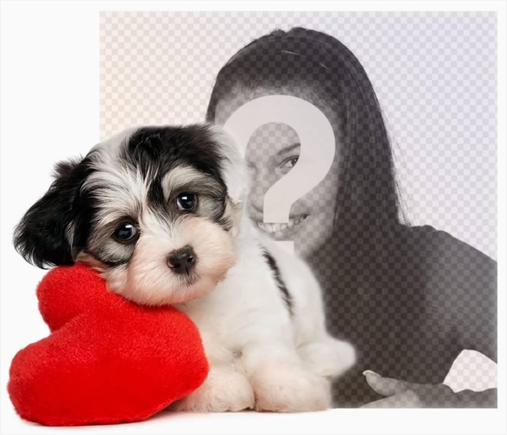 Effet photo dun chiot avec un coeur pour votre photo