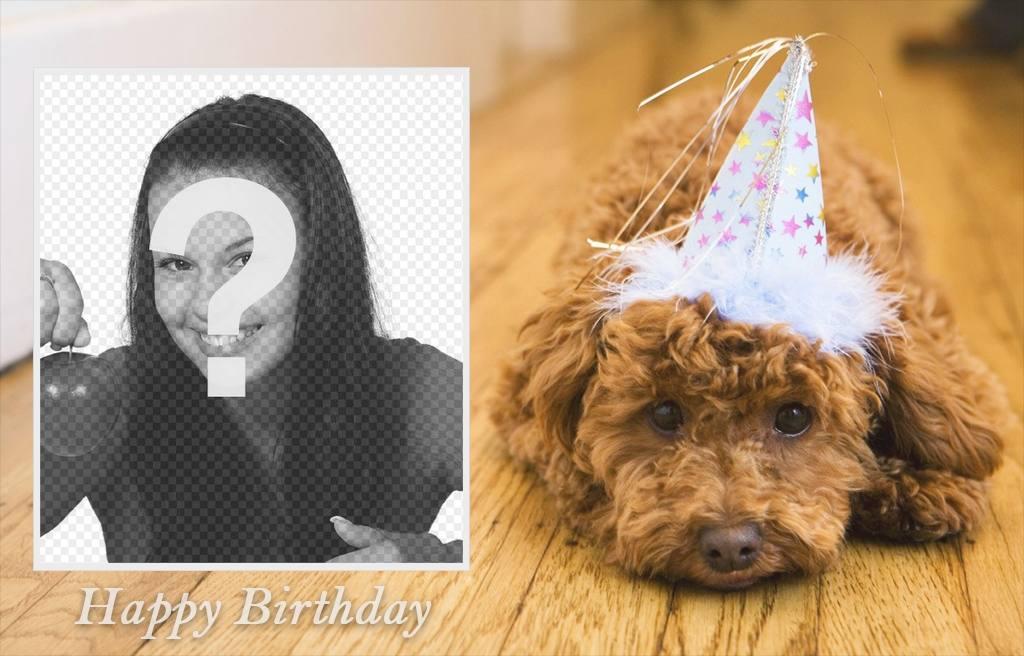 Effet photo danniversaire avec un chien pour votre photo