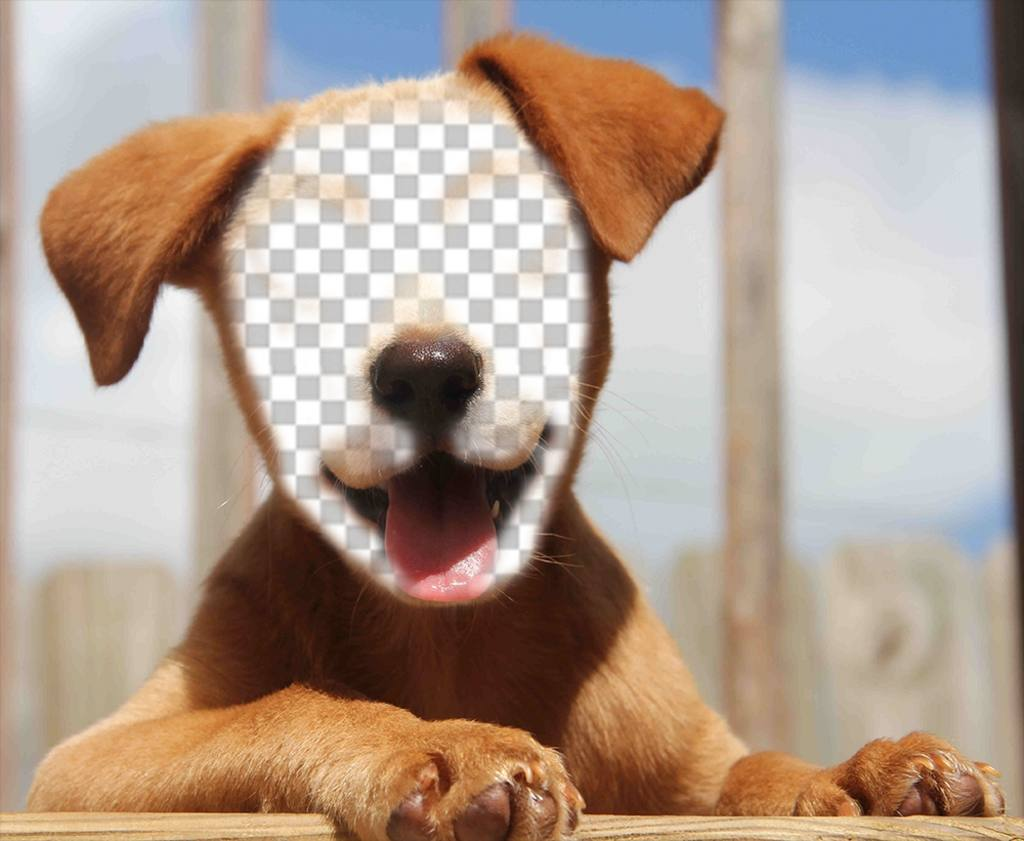 Ajouter votre visage à la face dun beau chien avec effet Fun cet effet de télécharger votre photo sur le visage dun chiot et de le partager sur vos réseaux sociaux pour faire rire vos amis avec cet effet gratuit et très réel. Soyez un chien tendre avec sa langue pendante édition photomontages où votre visage va fusionner avec ce chien que les gens vont adorer