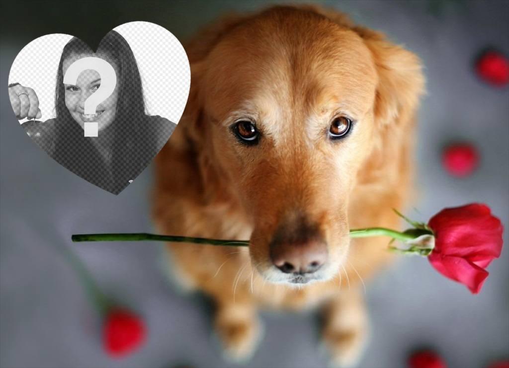romantic effet photo avec un chien et une rose pour ajouter votre photo photoeffets. Black Bedroom Furniture Sets. Home Design Ideas