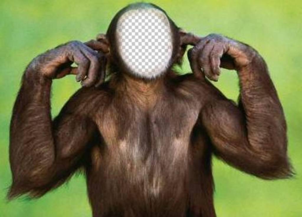 Photomontage du singe qui ne lécoute pas modifier avec votre photo