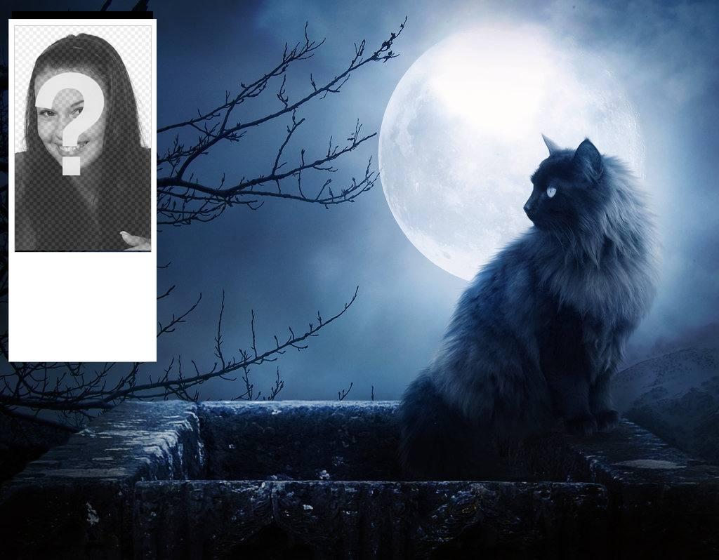 Personnalisés milieux twitter avec un chat noir et une nuit sans lune. Personnalisez avec votre photo en ligne