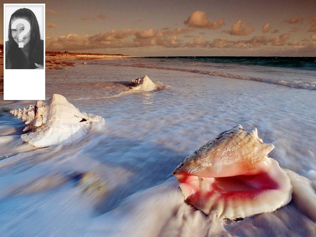 contexte de votre compte twitter de coquillages sur la plage  vous pouvez