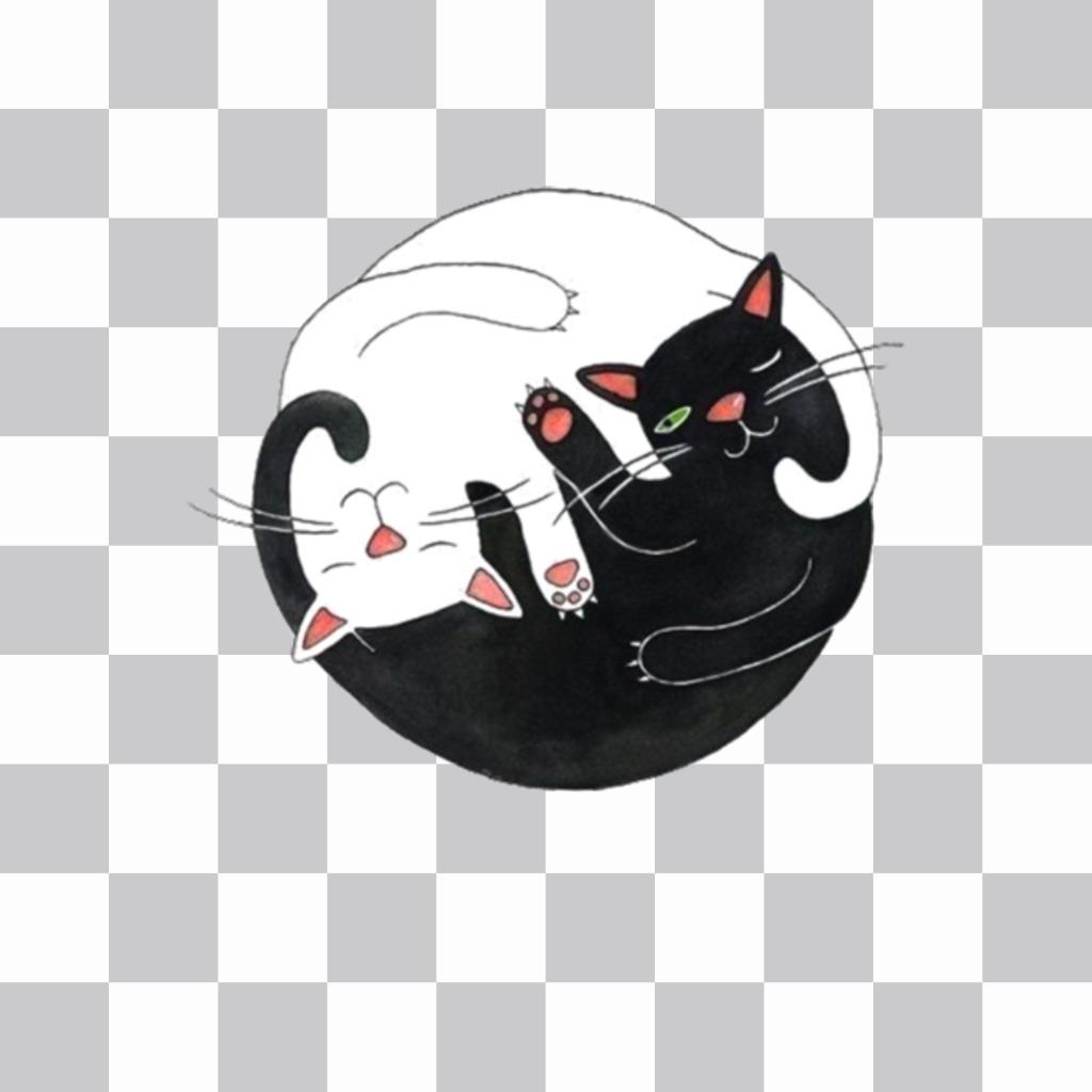 Autocollant embrassé deux chats