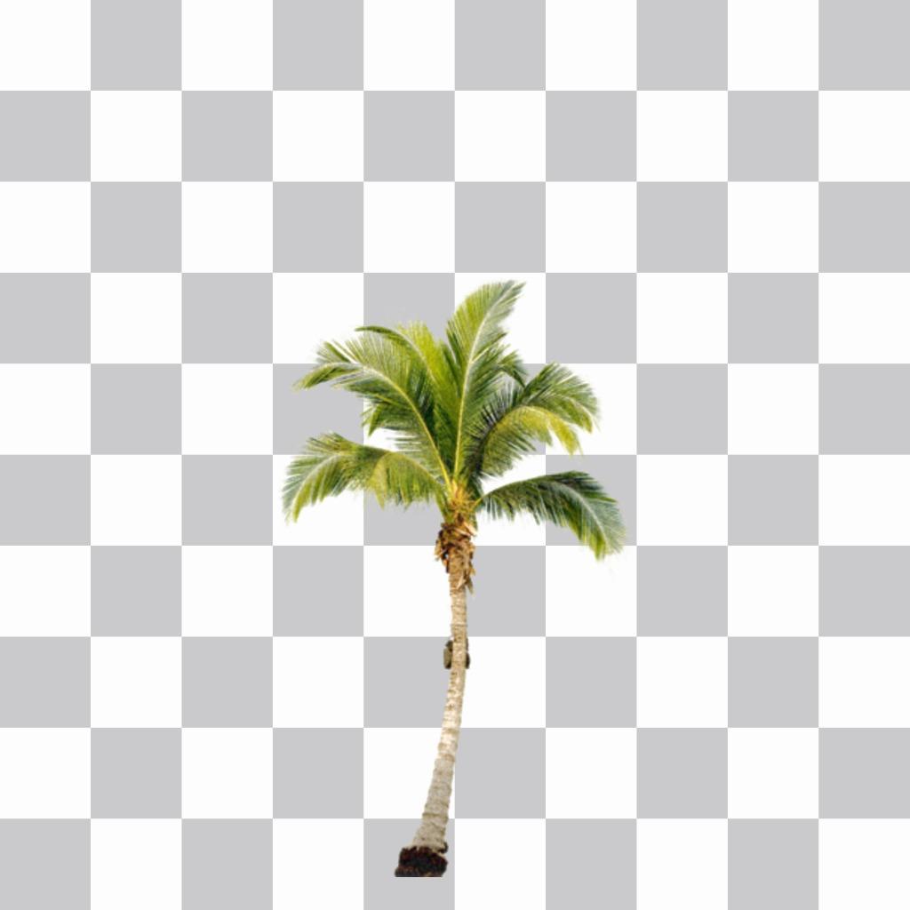 Mettez un palmier sur vos photos et crée un effet que vous êtes sur une plage des Caraïbes