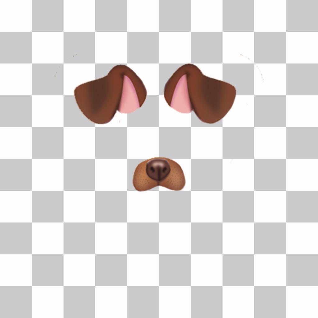 Collez les oreilles et le nez dun chiot dans vos photos gratuites